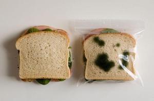sandwich moisi